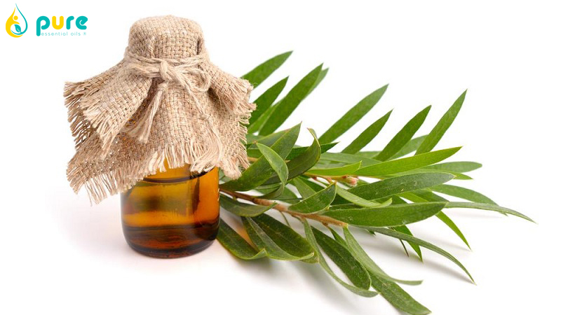 Tinh dầu tràm trà bán ở đâu đảm bảo nguyên chất?