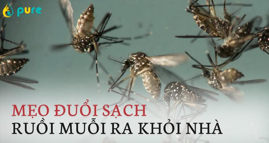 Các phương pháp đuổi ruồi, muỗi hiệu quả an toàn cho sức khỏe
