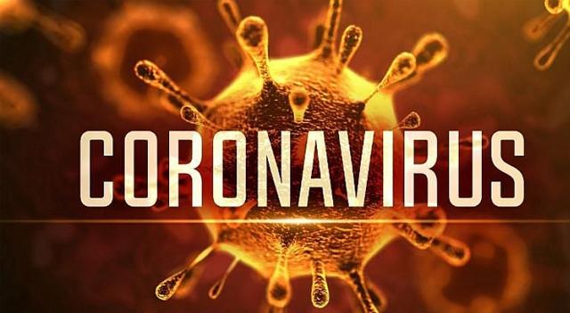 Cách dùng tinh dầu tràm ngăn ngừa virus corona