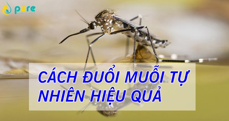Các phương pháp xua đuổi muỗi tự nhiên tại nhà hiệu quả