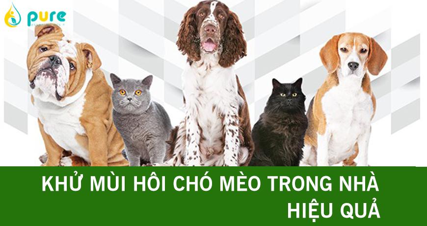 Mẹo khử mùi hôi chó mèo, vật nuôi trong nhà