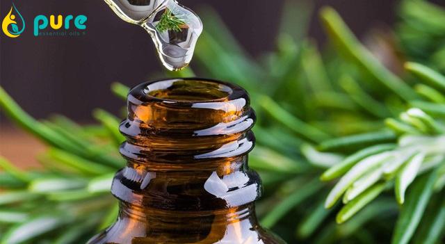 Công dụng của tinh dầu tràm trà và cách sử dụng hiệu quả nhất