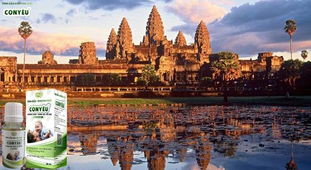 Dầu khuynh diệp nguyên chất tại Campuchia – Dầu khuynh diệp con yêu