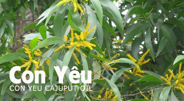 Mua dầu tràm ở đâu tốt nhất tại Tp Hồ Chí Minh