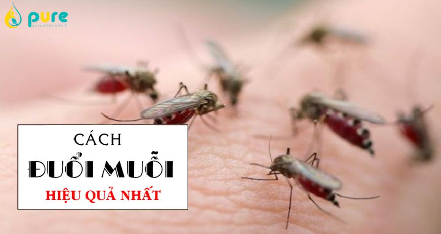 Đâu là cách để đuổi muỗi hiệu quả và an toàn nhất?