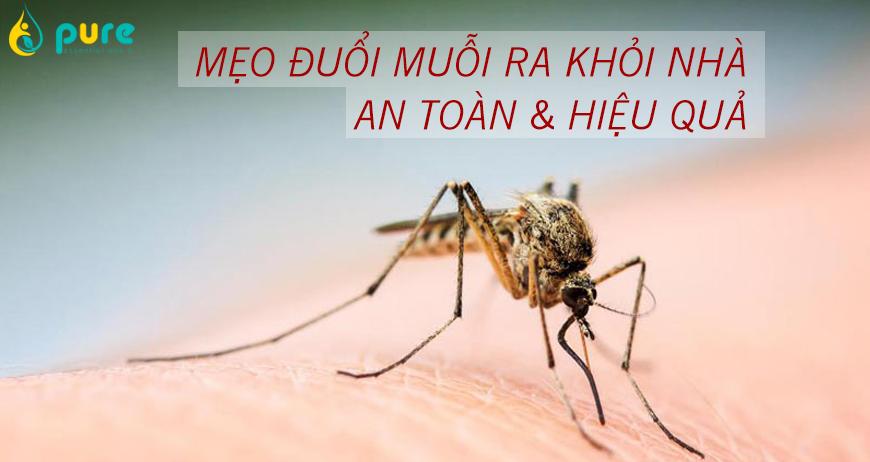 Những cách đuổi muỗi ra khỏi nhà một cách an toàn